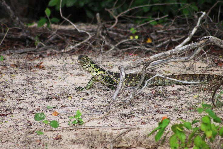 A Walk in the Woods  Royal Chundu Island Lodge, Zambia in the green season -  https://blog.royalchundu.com/in-the-woods/
