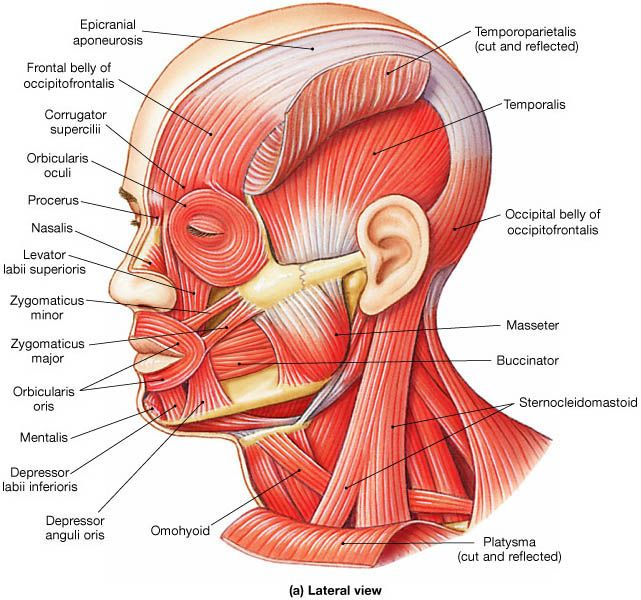 Face Muscle Identification #CPC #medical #coding