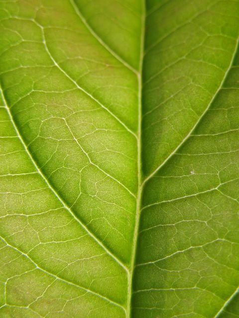 Natuurlijke structuur: nerven van een boomblad.