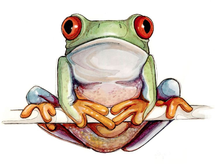 218 best ANIMALS-AMPHIBIANS images on Pinterest Frogs, Amphibians - fresh coloring pages tree frog