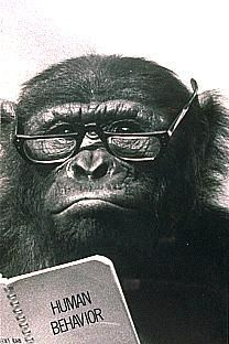 [Animals wearing glasses: Chimp] File:Chimpanzee-Teacher.jpg