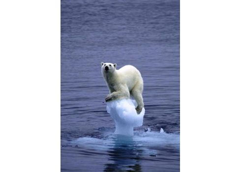 Polar bear sitting on what's left of its home tribalenergies.com.au