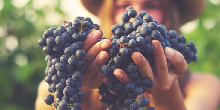 Study Finds Organic Wine Actually Does Taste Better #Wine #Wineeducation #Organic