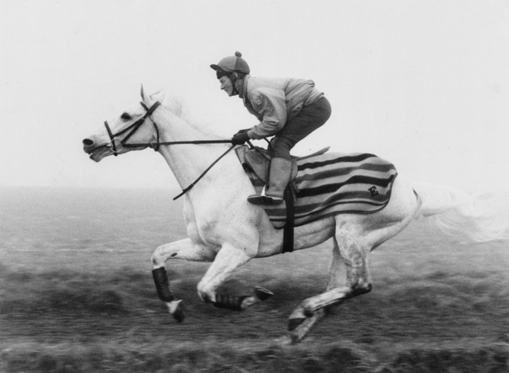 The famous race horse Desert Orchid pictured in a gallop during training.