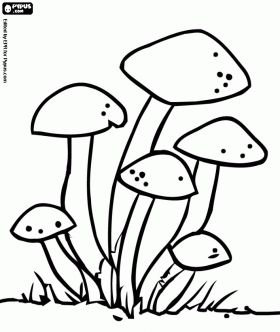 Group Of Fungi Adult Colouring Mushrooms Toadstools