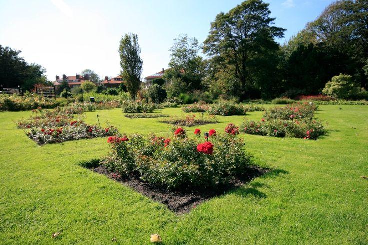 rozentuin Westbroekpark, nog steeds keer heen.....