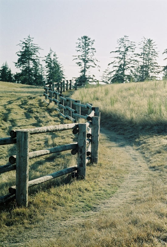 Wooden fences! Source: swanss