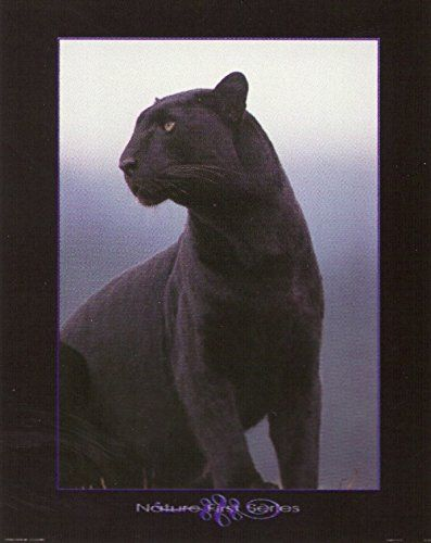 Amazing! If you want to bring feel of wildlife century into your home place this amazing snarling Black Panther art print poster which is sure to catch every eye towards this poster and make your wall a focal point of your home. This poster will add a classic touch and perfect for every wild animal lover. So what are you waiting for order this wall poster for its superb quality and color accuracy.