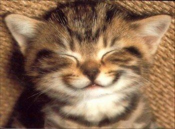 Chat qui rit !!! Trop mignon