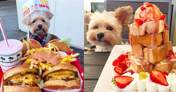 Abandonné dans les rues de Los Angeles en 2014, Popeye devait faire les poubelles pour se nourrir. Emue par son triste sort, une femme au grand cœur a décidé de l'adopter. Depuis, Popeye fait le tour du monde des restaurants et est devenue une star d'Instagram !