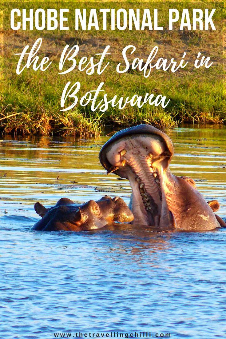 Chobe National Park - The best safari in Botswana   Safari in Botswana   Going on a safari in Chobe National Park   Playing hippo's   #botswana #chobenationalpark #africansafari #safari