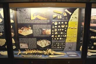 Sabato 7 aprile riprendono le visite guidate al Museo paleontologico territoriale dell'Astigiano, nel Complesso del Michelerio in corso Alfieri 385 ad Asti, con la mostra «Le conchiglie, le balene e la storia…».