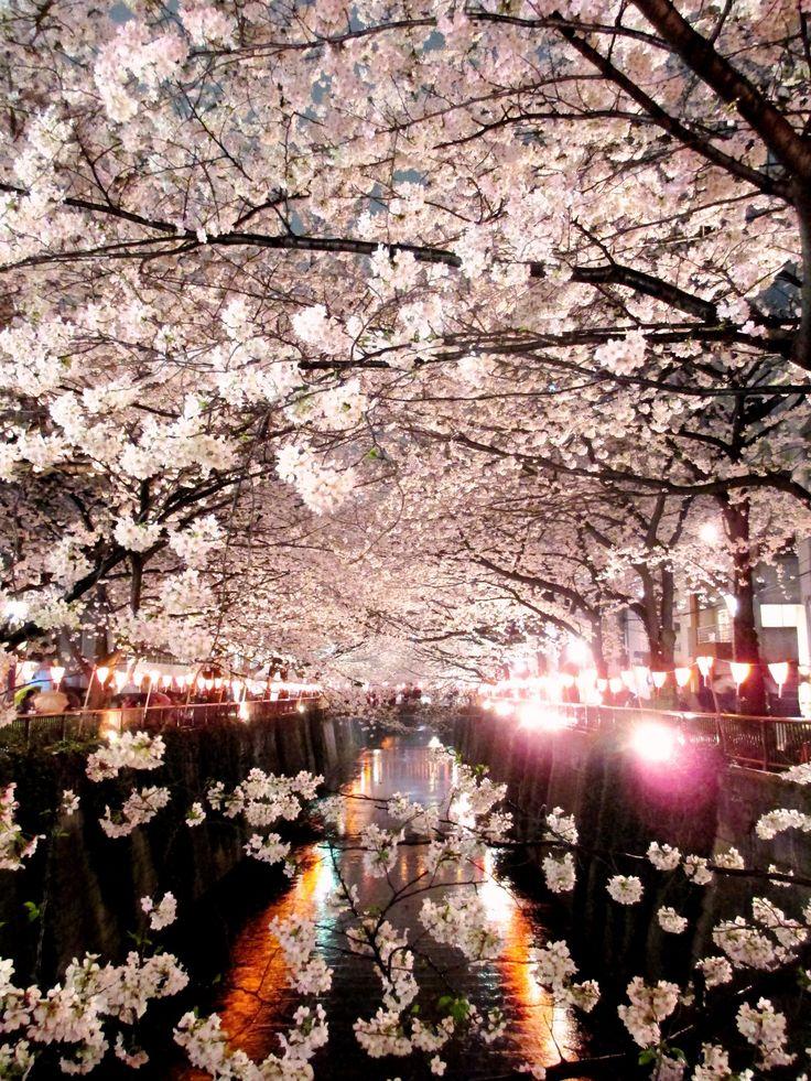 Falling Cherry Blossoms Wallpaper 314 Best Sakura Images On Pinterest Flowering Trees