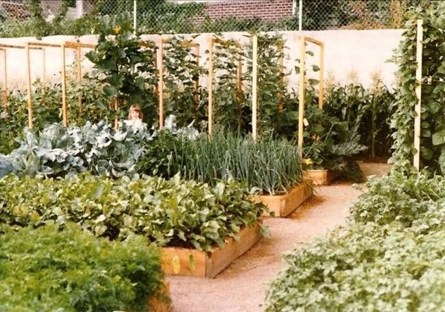 A typical Mittleider Garden (courtesy of Food for Everyone.org) Notice the wide aisles which cut down on pests w/o cutting down on production.
