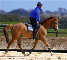 how to teach a horse to trot