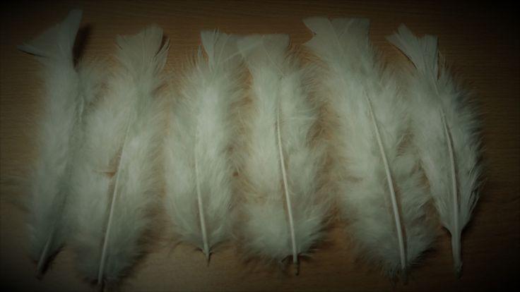 Set van 6 Witte Veren
