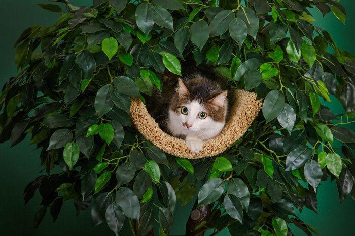 Деревья для кошек, домики для кошек