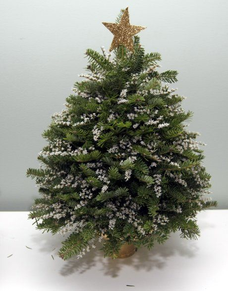 Make a tiny Christmas tree as a centerpiece for a table or sideboard from cuttings. Great instructions and how to make a beautiful tabletop tree using clippings from around the yard.