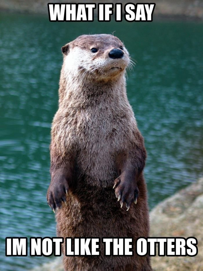 Just an otter meme
