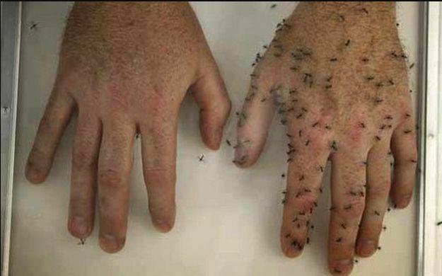 En esta época del año empiezan a molestarnos los zancudos, moscas y otros insectos. Su picadura es molesta y algunas personas pueden sufrir de alergia a ellos, o simplemente nos dejan sus antiestéticas marcas.