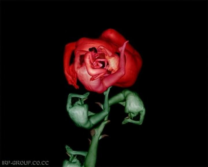 A human rose