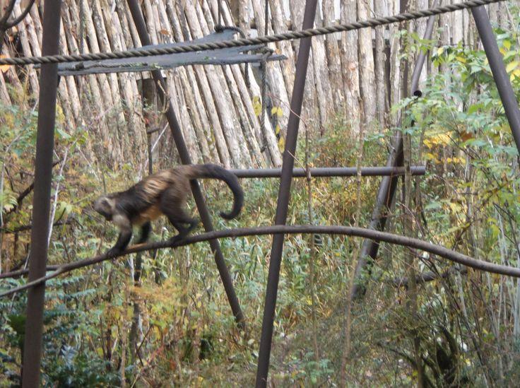 Was zo mooi daar apen heul