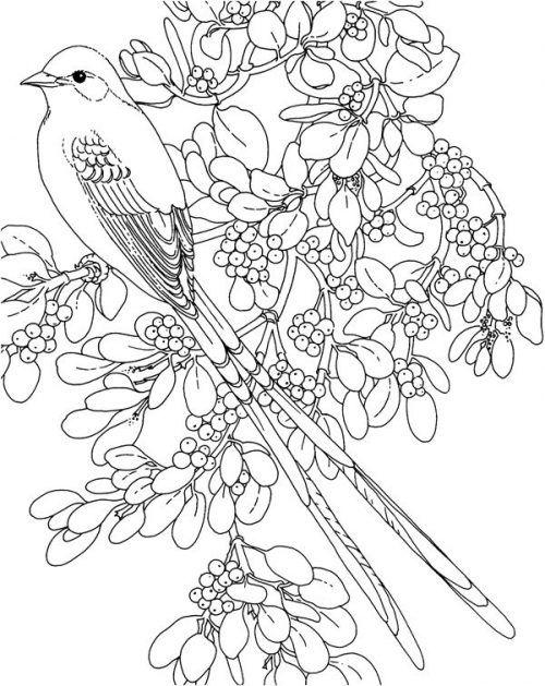 Bluhende Vogel Malbucher 282 Vogel Malvorlagen Malvorlagen Blumen Ausmalbilder