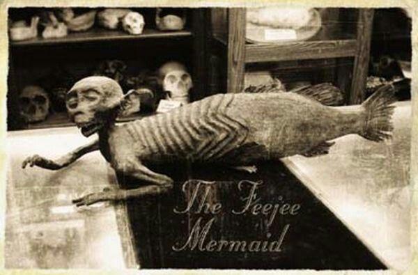 Image Result For Original Pt Barnum Fiji Mermaid