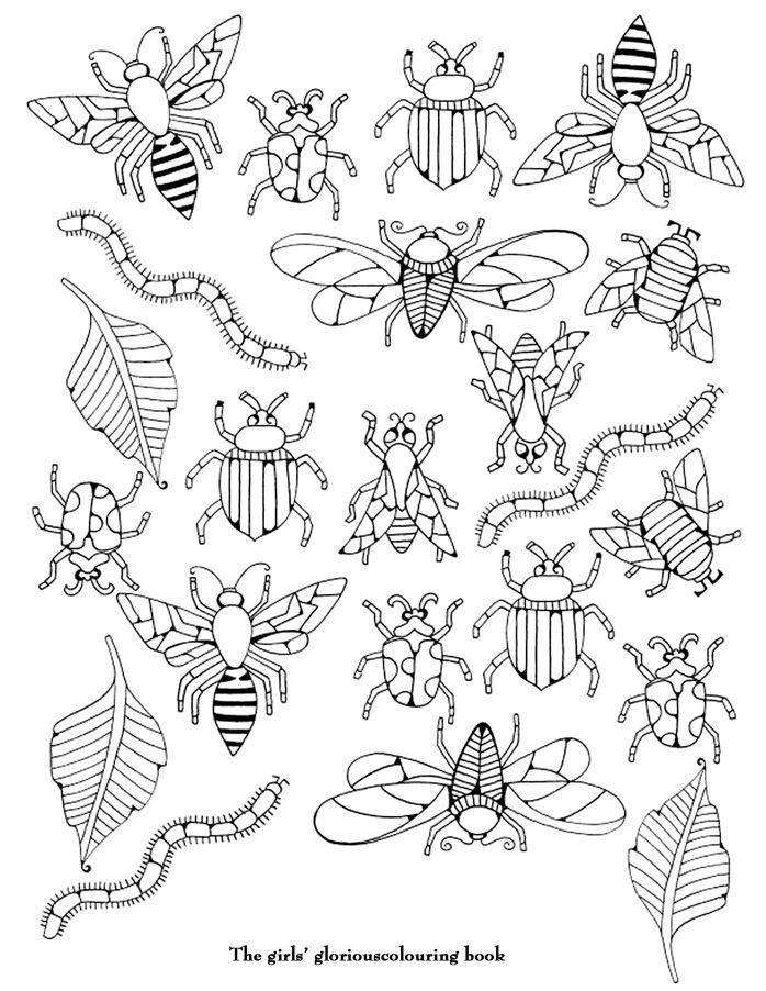 85 besten insecte Bilder auf Pinterest | Buntstifte, Malbuch und ...