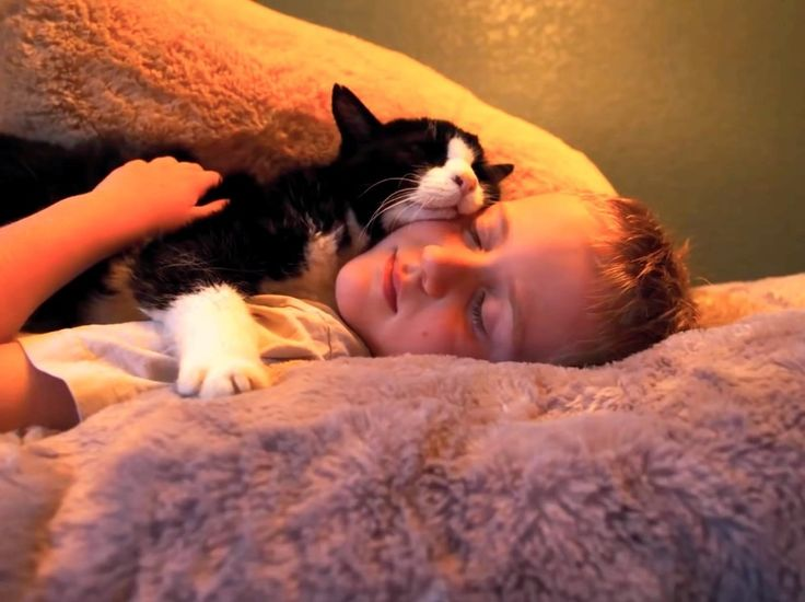 Best Adopted At Last Images On Pinterest Shelters Animal - 13 year old shelter cat finally got adopted and now only falls asleep if his human holds his paw