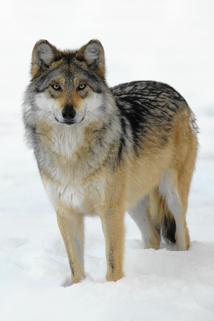 Mejores 568 imágenes de cutiess en Pinterest | Animales salvajes ...