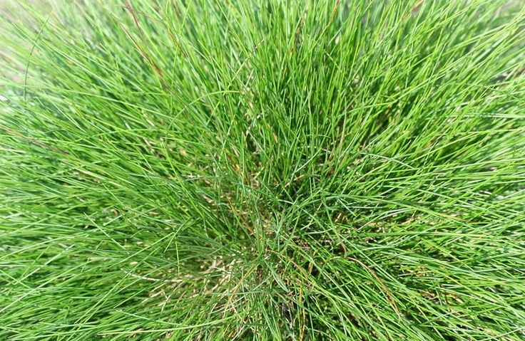 WHATS THE BEST TYPE OF GRASS SEED?