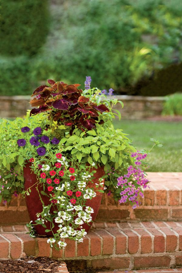 Unlike cut blooms, a living flower arrangement planted in a container gives you color and beauty for months. Combine plants that thrive in the same growing conditions and offer colors and textures that complement each other. Dazzling Petunias