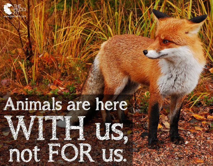 Animals are here WITH us, not FOR us. Please do not buy