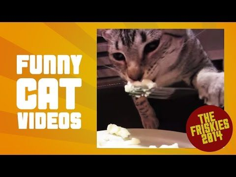 Best Cat Video Compilation - The Friskies Awards 2014 - YouTube