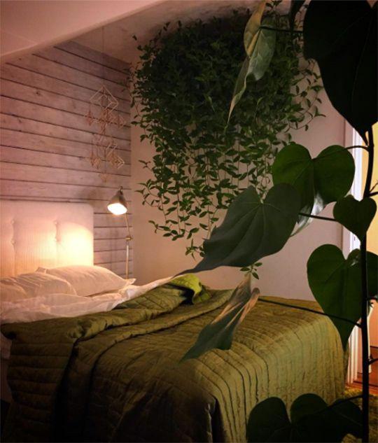 Var dags rum: Välkommen in i sovrumsdjungeln!