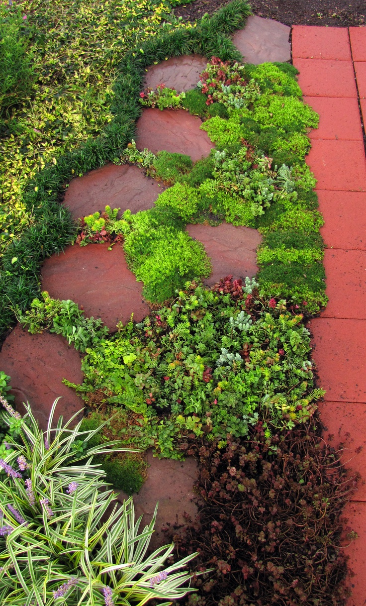29 best images about grow the perennial garden of your On filler plants for landscaping