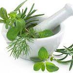 Obat Herbal Wasir Ambeien