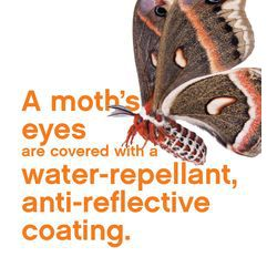 Lens coatings reduce reflections and can have other benefits too such as anti-scratch, anti-dust, and water repellant. Moths have built-in lens coatings. #DidYouKnow #EyeFacts