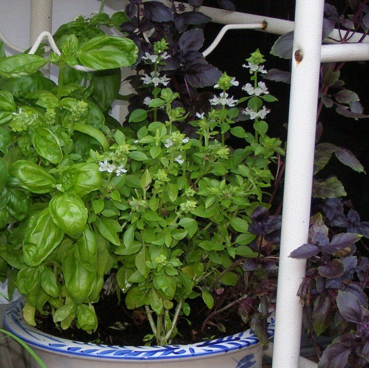 Container Herb Garden For Beginners images