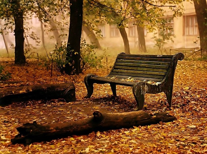 autumn leaves on bench - photo #6
