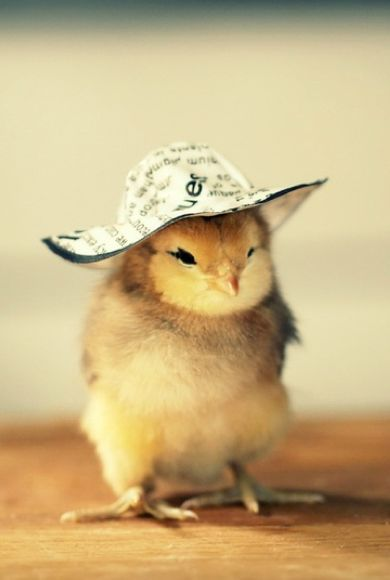 good day... for a hat.