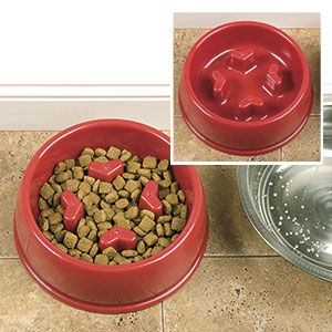 SLOW DOWN DOG FOOD BOWL. Specially designed bowl stops ... - photo#43