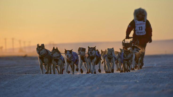 """Es ist das älteste, längste und härteste Schlittenhunderennen der Welt: Am ersten Samstag im März starten in Alaska wieder die weltbesten Hundeschlitten-Teams zum """"Iditarod Trail Sled Dog Race"""". Die Strecke führt durch die tief verschneite Wildnis des hohen Nordens – rund 1.600 Kilometer weit."""