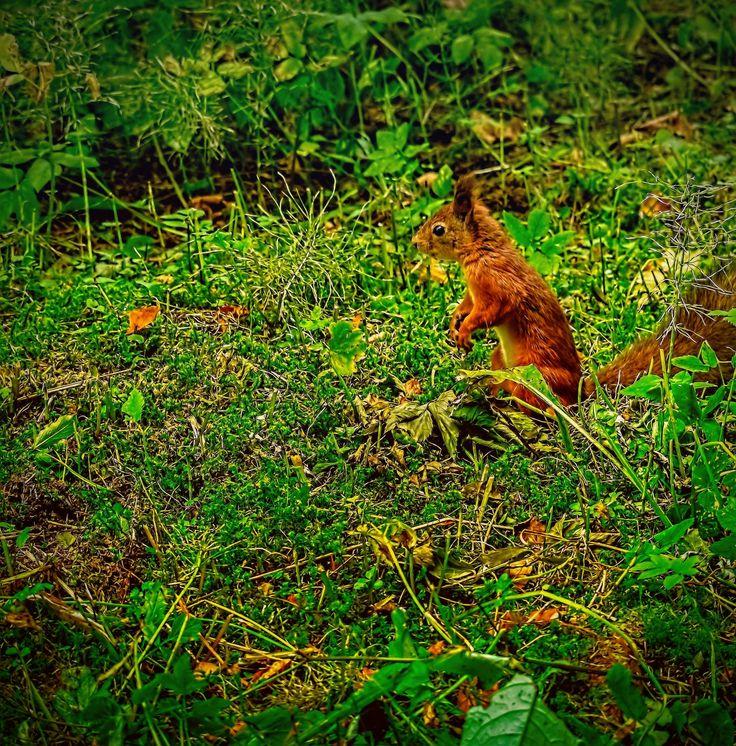 squirrel by Стас Киренков on 500px