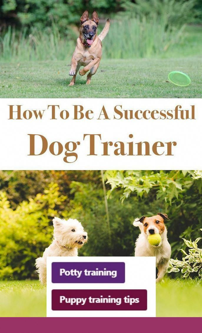 Clicker Training Puppy To Walk On Leash Clicker Training Puppy