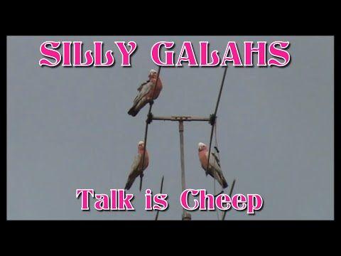 Silly Galahs: Talk is Cheep