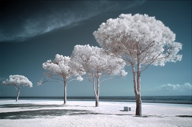 Trees: Angel, Snowy Trees, Winter Trees, Colors, Inspiration Photo, Flowers Trees Pl, White Trees, Weights Loss, Cool Trees