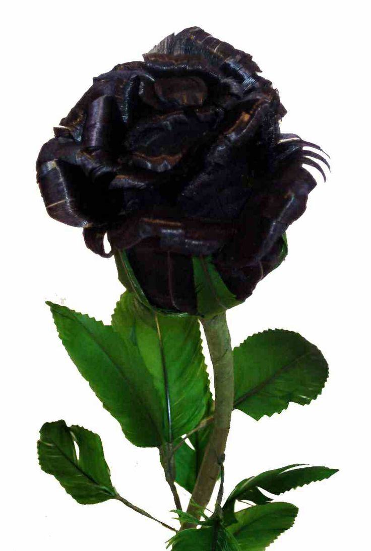 42 best Roses and gothic roses images on Pinterest   Black flowers ...