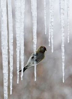 hanging on an icicle